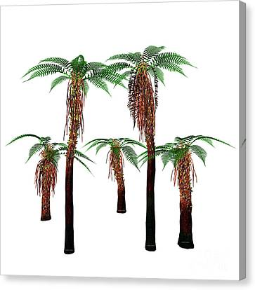 Dicksonia Trees Canvas Print