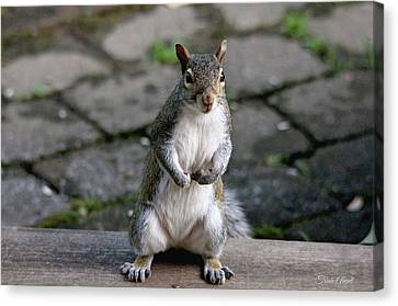 Canvas Print featuring the photograph Did You Say Peanuts? by Trina Ansel