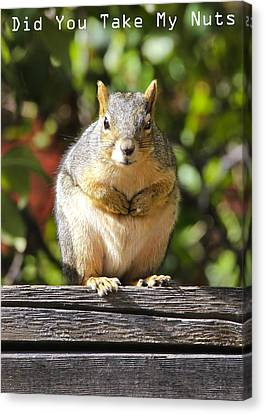 Canvas Print featuring the photograph Did You Take My Nuts by James Steele
