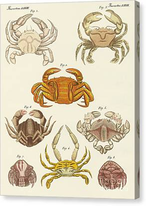 Cancer Canvas Print - Different Kinds Of Crabs by German School