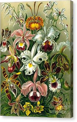 Different Varieties Of Orchid Canvas Print