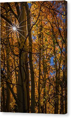 Diffraction Action Canvas Print by Gary Migues