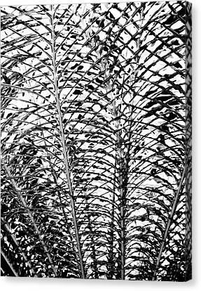 Diffusion  Canvas Print by William Dey