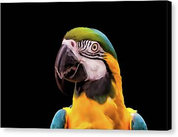 Digital Painting Of A Blue And Yellow Macaw Parrot Canvas Print