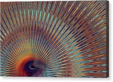 Digital Peacock Feather Canvas Print by Lilia D