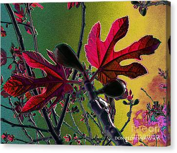 Figtree Canvas Print - Fig Tree Leaves 2 by Don Pedro De Gracia