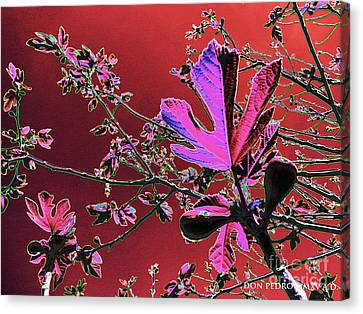 Figtree Canvas Print - Figtree Leaves 3 by Don Pedro De Gracia