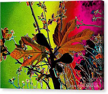 Figtree Canvas Print - Figtree Leaves 4 by Don Pedro De Gracia