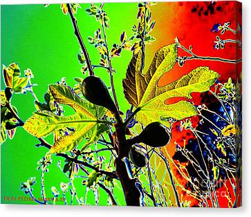 Figtree Canvas Print - Fig Tree Leaves by Don Pedro De Gracia