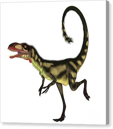 Dilong Dinosaur Profile Canvas Print by Corey Ford