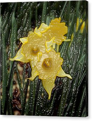 Dimensional Daffodils Canvas Print by Wide Awake Arts