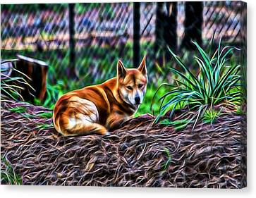 Dingo From Ozz Canvas Print