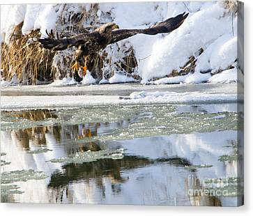 Feeding Canvas Print - Dinner On Ice by Mike Dawson
