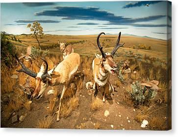 Diorama Canvas Print by Todd Klassy