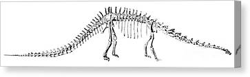 Terrestrial Canvas Print - Diplodocus Carnegii by Science Source
