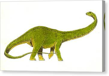 Diplodocus Canvas Print by Michael Vigliotti
