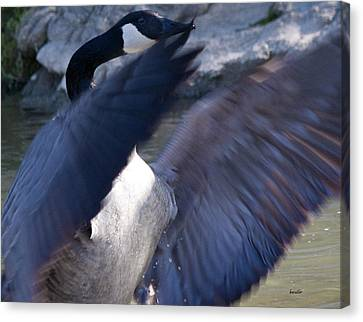 Geese Canvas Print - Director by Betsy Knapp