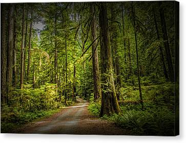 Dirt Road On Vancouver Island Canvas Print by Randall Nyhof