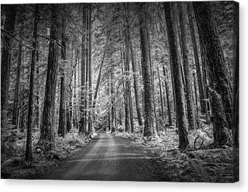 Dirt Road Through A Rain Forest In Black And White Canvas Print by Randall Nyhof