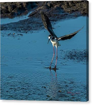 Feeding Birds Canvas Print - Dirty Feet by Marvin Spates