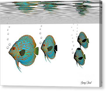 Discus Fish Canvas Print by Corey Ford