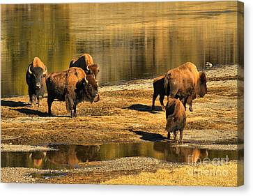 Canvas Print featuring the photograph Discussing The River Crossing by Adam Jewell