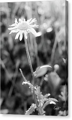 Disheveled Canvas Print