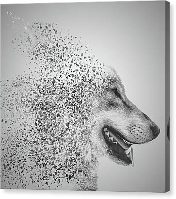 Human Head Canvas Print - Disintegrated Wolf by Martin Newman