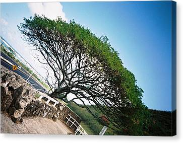Canvas Print featuring the photograph Disoriented Tree by Judyann Matthews