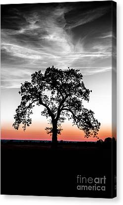 Canvas Print featuring the photograph Distinctly by Betty LaRue