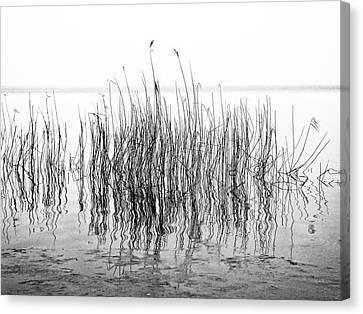 Distortion  Canvas Print