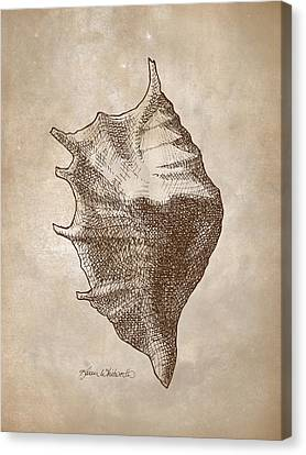 Canvas Print featuring the drawing Distressed Antique Nautical Seashell 1  by Karen Whitworth