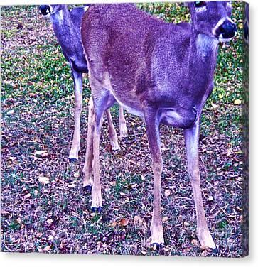 Distrubing Deer Canvas Print by Chuck Taylor