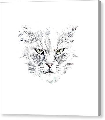 Disturbed Cat Canvas Print by Everet Regal
