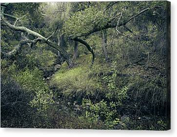 Canvas Print featuring the photograph Ditch And Oaks by Alexander Kunz