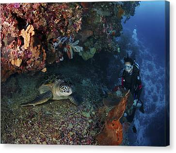Diver And Sea Turtle, Manado, North Canvas Print by Mathieu Meur