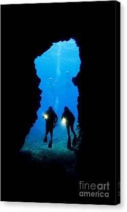 Divers Silhouetted Through Reef Canvas Print by Dave Fleetham - Printscapes