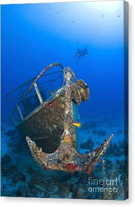 Divers Visit The Pelicano Shipwreck Canvas Print by Karen Doody