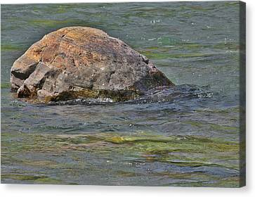 Diving Turtle Rock - Flathead River Middle Fork Mt Canvas Print by Christine Till