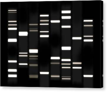 Chromosome Canvas Print - Dna Art White On Black by Michael Tompsett