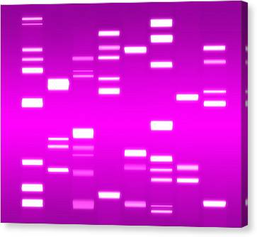 Chromosome Canvas Print - Dna Magenta by Michael Tompsett