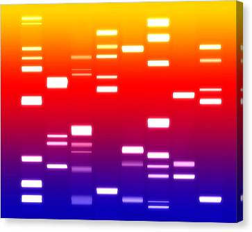 Dna Sunset Canvas Print