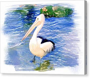 Do-00088 Pelican Canvas Print