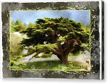 Do-00318 Cedar Barouk - Framed Canvas Print