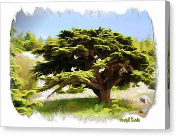 Do-00319 Cedar Tree Canvas Print