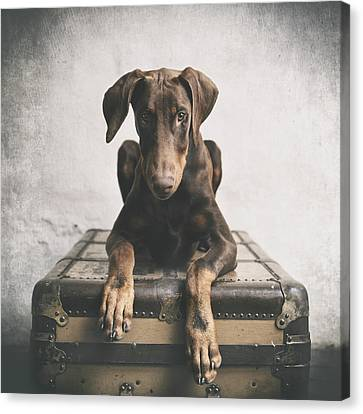 Doberman Pinscher Puppy 3 Canvas Print by Wolf Shadow  Photography