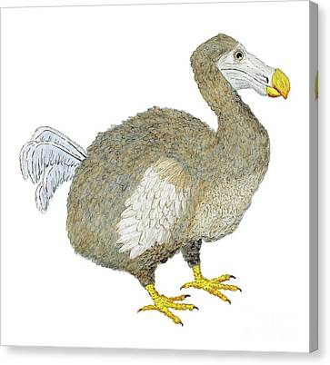Canvas Print featuring the painting Dodo Bird Protrait by Thom Glace