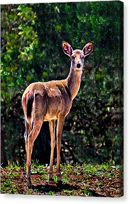 Doe A Deer In Thousand Trails Canvas Print by Bob and Nadine Johnston