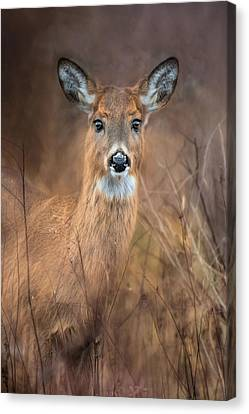 Canvas Print featuring the photograph Doe A Deer by Robin-Lee Vieira