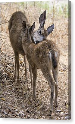 Doe And Fawn Canvas Print by Bruce Frye
